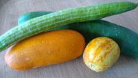 Verschiedene Gurken z.B. Russische Gurke,Zitronengurke usw. Foto Bio Gärtnerei  Kirnstötter