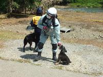 石川県救助犬兼嘱託警察犬