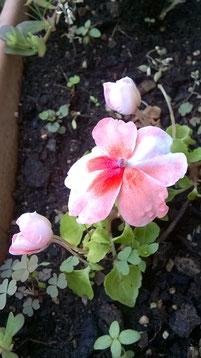 Flora - Quando Intervenire Con #AcquaBase !?!