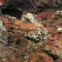 Fels und Boden enthalten viele anorganische Stoffe.