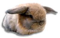 KLEINTIER-NAGER  kaninchenstall bei Zoo Kellner