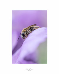 Wald, Naturfotografie, Sabine Grill