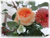 2013年秋の花