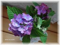 2013年盛夏の花
