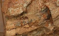 Fossilfund Cordait Grabungsteam Chemnitz