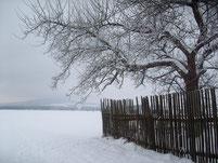 Müllers Garten im Januar