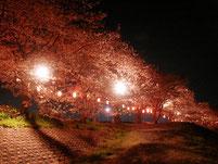 新狭山公園 夜桜まつり