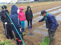 みんなで小松菜の苗の植え方のレクチャーを受けています