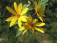 Naturabilis - Heilpflanzen