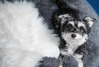 Preise Hundebetreuung, Hundetagesstätte Potsdam