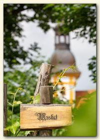Kloster-Winzer Neuzelle Muskat Wein