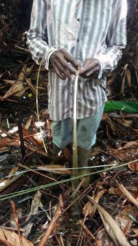 Coupe des aroumans avec l'artisan vannier Michel Pinas. Culture bushinenguée N'djuka.