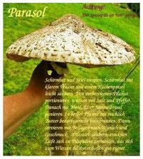 Speisepilz Parasol - Rezept by skb