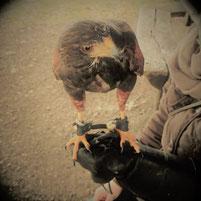 Maria Wildrich Therapeut Coach Heilpraktiker Berlin Pankow Ohrakupunktur Bachblüten Klangmassage Klangtherapie Reiki NLP Geistiges Heilen Angstzustände Schlafstörung Unruhe Migräne Konzentrationsstörung Verspannungen