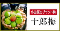 小田原のブランド梅「十郎梅」