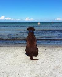 Hunde lernen Geduld bei Simsammlerbim