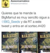 concurso semillas marihuana big seeeds, sorteo semillas marihuana, sorteo semillas marihuana big mamut, semillas marihuana barcelona big