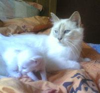 Paddy et sa mère Albizia
