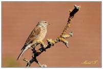 Oiseaux de petite taille