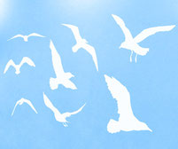 Seagull wall art stickers. Different sizes and lots of colours to choose from.