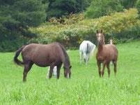 馬ってどんな動物?