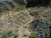 鐘の岬 崖