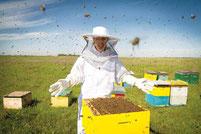 マザーアースニューズ ミツバチ 養蜂