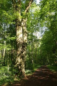 Bäume faszinieren und erzählen eine eigene Geschichte
