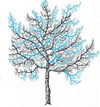 Bayerischer Landesverband für Gartenbau  und Landespflege e.V. 2011: Obstbaumschnitt in Bildern