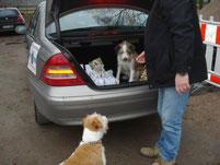Wenn Fellnasen Hundekekse einkaufen