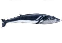 クジラの夢