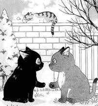 """manga """"Kome Si Belang"""" de Natsumi Hoshino (2008)"""