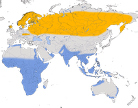 Karte zu r Verbreitung des Bruchwasserläufers (Tringa glareola)