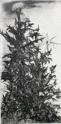 「アザミとクモ」銅版画 600x300mm