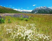 unberührte Natur Neuseeland für reine Zutaten