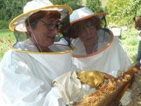 curso apicultor