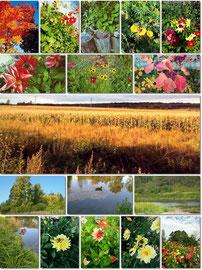 «Осень - пора золотая». Номинация «На лучшую фотографию об осени»