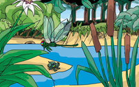 Farben, Natur, Tiere, Pflanzen, Flora, Fauna