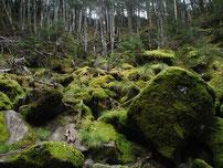 茶臼山 地獄谷 ガイド