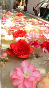 水に浮く薔薇の写真フリー素材 Photo free material of flower rose floating on the waterside