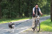 Husky am Fahrrad