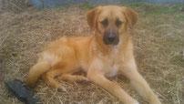Luna, auf Ninovan seit Februar 2016, 8 Monate alt