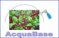 #AcquaBase - Le Piante, Sembrano Abbiano Preso Un Gran Respiro.