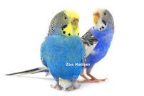 Vogelzubehör bei Zoo Kellner