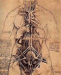 """Tratto da: """"Observationes anatomicae""""."""