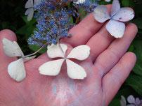 Hand, bemalt mit Blütenblättern