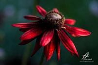 Flora/Flowers