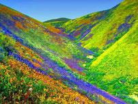 La vallée des fleurs, qui mérite un voyage en Inde