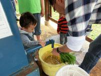 井戸で野草を洗う