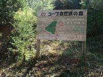 ▲ コープ自然派の森の看板向かって左に生えているのが初年度(4年前)に植樹した木